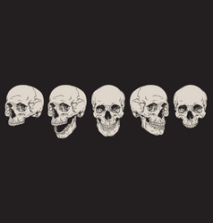 anatomically correct human skulls set isolated vector image