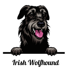 Head irish wolfhound - dog breed color image a vector