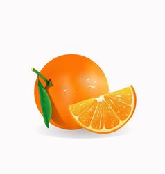 realistic fresh orange fruit isolated vector image