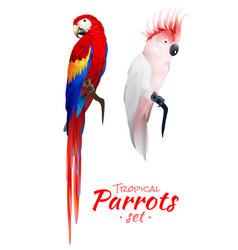 tropical parrots realistic set vector image vector image