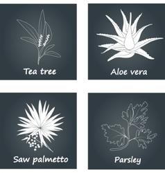 Collection of Herbs vector