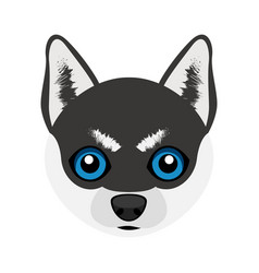 cute siberian husky dog avatar vector image