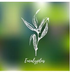 eucalyptus hand drawn sketch botanical vector image