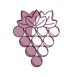 Silhouette delicious grape healthy fruit vector