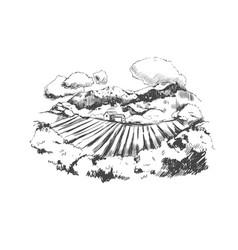 vineyard landscape vector image
