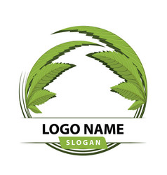 Cannabis leaf medical logo vector