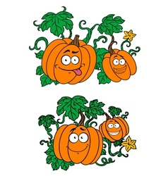 Cartoon pumpkins growing on vines vector image
