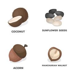 Coconut acorn sunflower seeds manchueian walnut vector