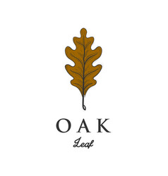 hand drawn oak leaf designs vector image