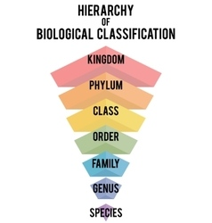 with major taxonomic ranks vector image