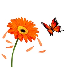 Nature summer orange flower with butterfly vector image vector image