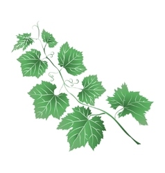Grape leaves baroque plants vector