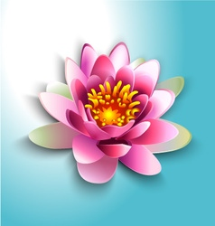 water lily vector image