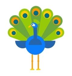 Beautiful peacock colorful bird vector image