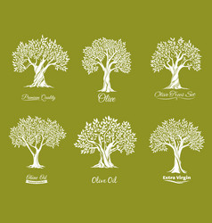 Olive trees farm icons set vector