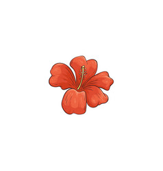 orange hibiscus hawaiian tropical flower in vector image