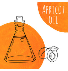 Hand drawn apricot oil bottle with orange vector