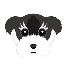 Cute schnauzer dog avatar vector
