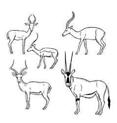 Hand drawn african antelopes sketch vector