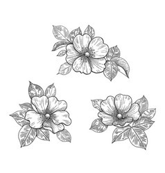 hand drawn floral set with dog- rose flowers and vector image