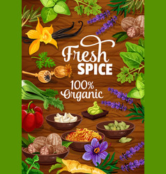 organic herbs and cooking spices seasonings vector image