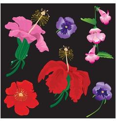 Set flowers bloom - hibiscus violet vector