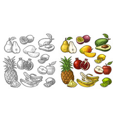 Set fruits pineapple lime banana pomegranate vector