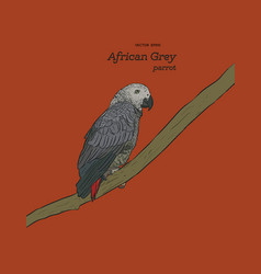 african grey parrot hand draw sketch vector image