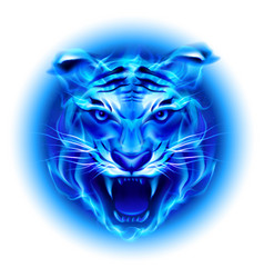 Head of fire tiger in blue on white background vector