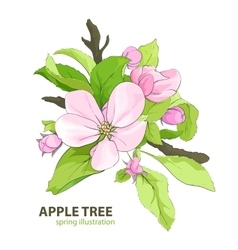 Apple tree flowers vector