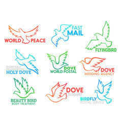 dove bird flying business design icons vector image