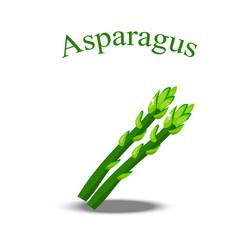 Fresh asparagus stem vector