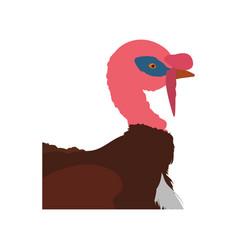 Turkey bird farm vector