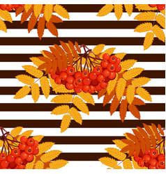 autumn seamless pattern with rowan vector image vector image