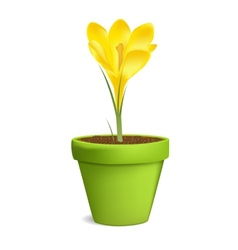Crocuses in Flowerpot Isolated on White vector image