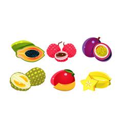 fresh tropical fruits set papaya lychee vector image