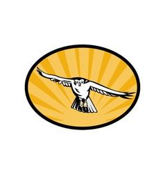 Goshawk bird swooping down vector