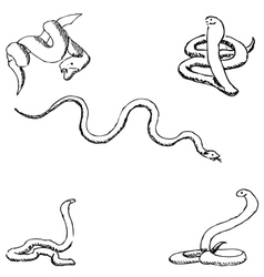 Snakes A sketch by hand Pencil drawing vector