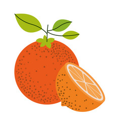 White background with one orange fruit and half vector