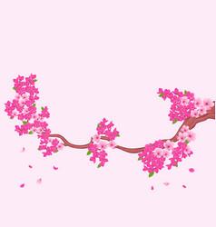 Blooming sakura branch over light pink vector