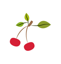 Colorful silhouette with cherries fruits with stem vector