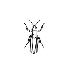 grasshopper hand drawn sketch icon vector image