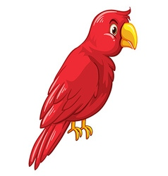 Red bird on white background vector image