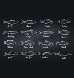 Set fish vector
