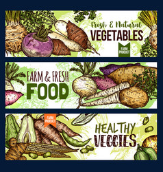 Vegetables and farm food veggies banners vector