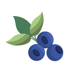 blueberry leaves diet icon vector image