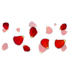 set of naturalistic rose petals on background vector image