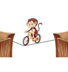 Monkey riding bike on the rope vector image vector image