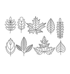 set of doodle leaves in line vector image