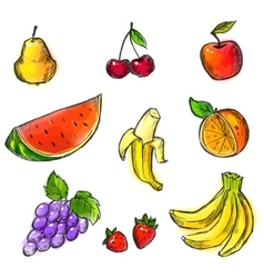 Colorful Fruits Collection vector image